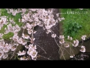Aomori spring Japan