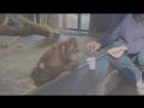 Реакция обезьяны на фокус