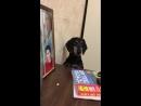 Собачка хочет жувачку