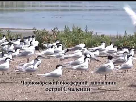 Чорноморському біосферному заповіднику -- 90 років