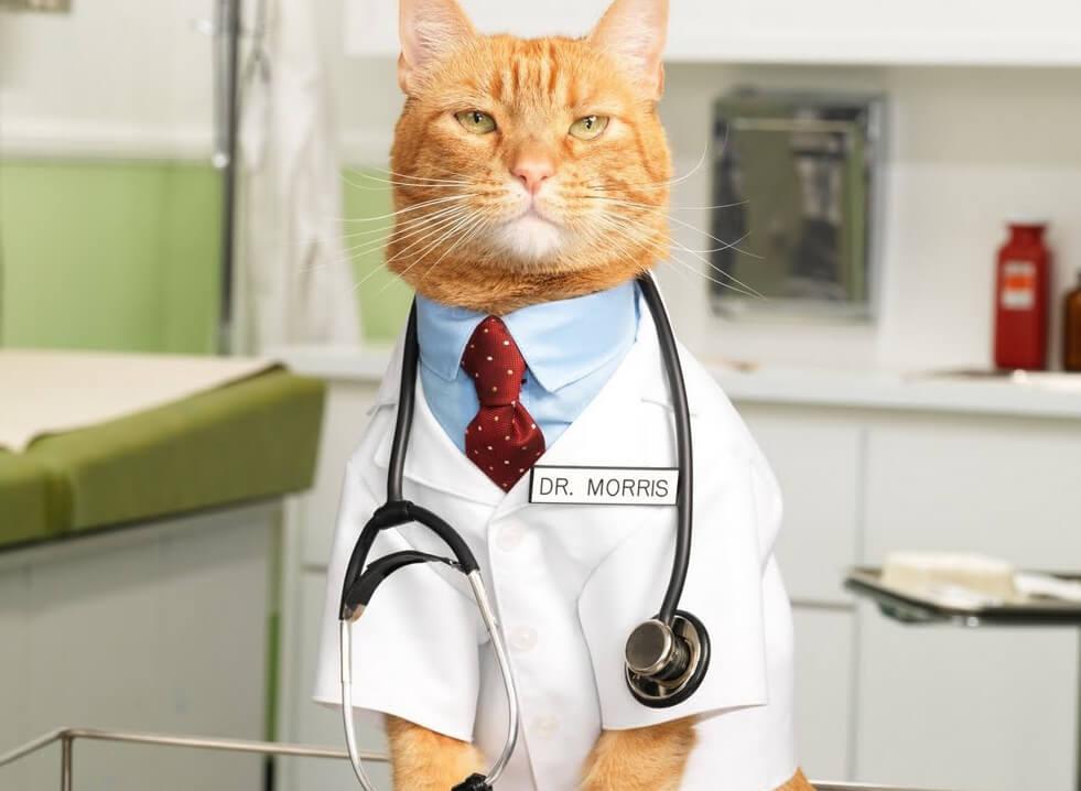 Ученые назвали пользу кошек для детей
