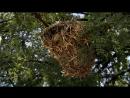 BBC Африка 1 Калахари Познавательный природа животные 2013
