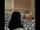Кот-гипнотизёр и чёрное глазастое пятно