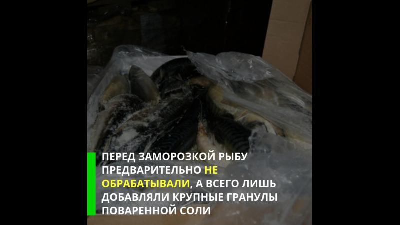 В Рязани изъяли крупную партию контрабандной рыбы