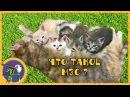 Спасенные котятки осваиваются на новом месте