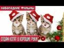 Новогодняя комедия мелодрама * Отдам котят в хорошие руки *