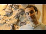 Top Ten Dino and Fossil Discoveries with Steve Brusatte - Walking With Dinosaurs