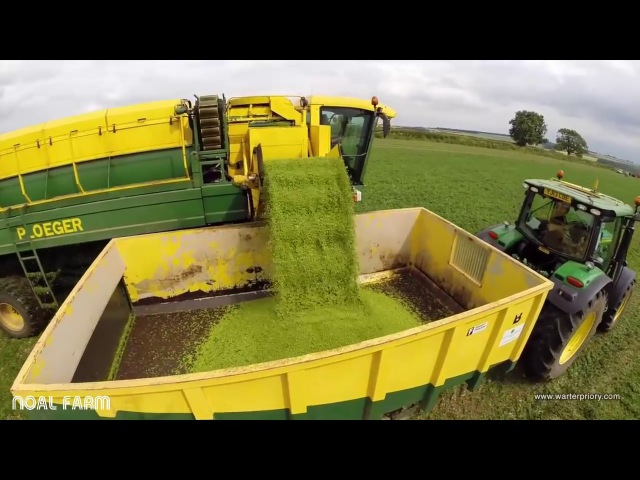Hervesting Pea Time || Harvest Pea Machine modern agriculture || How it works Noal Farm 2017