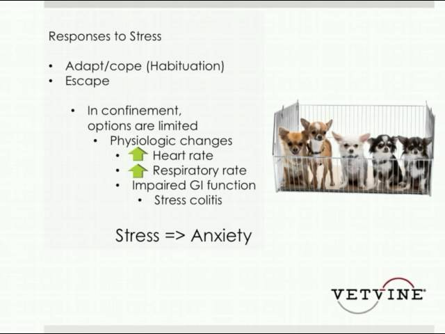 Беспокойства у собак. Предпосылки и подходы к лечению / Anxiety in Dogs - Background and Approaches to Treatment