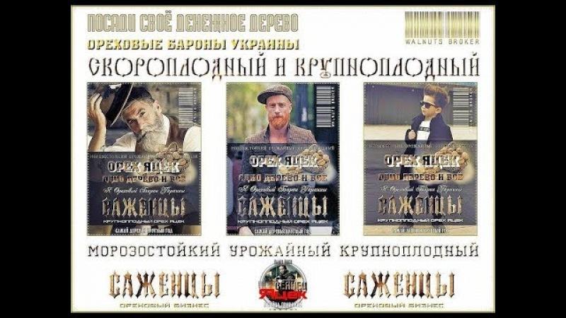 Орех Яцек, 0985674877, 0957351986, Large Walnuts