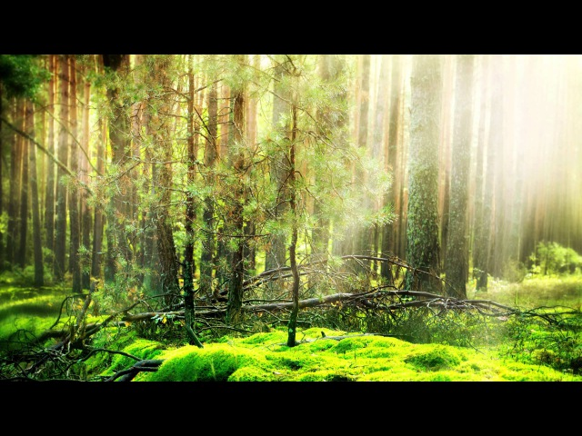 3 HOURS Relaxing Celtic Fantasy Music Enchanted Elven Melody for Relax Dream Meditation Study