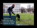 гиперактивная собака Дрессировка Самые важные упражнения