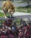 Правильный зоопарк. Хищники ходят там, где хотят, а люди приезжают к ним в клетках.