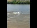Какой породы этот дельфин