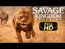 ДИКОЕ КОРОЛЕВСТВО ВОССТАНИЕ - УБИЙЦА КОРОЛЯ Еп4 / FULL HD - Док. Фильм 2018 Amazing Animals TV