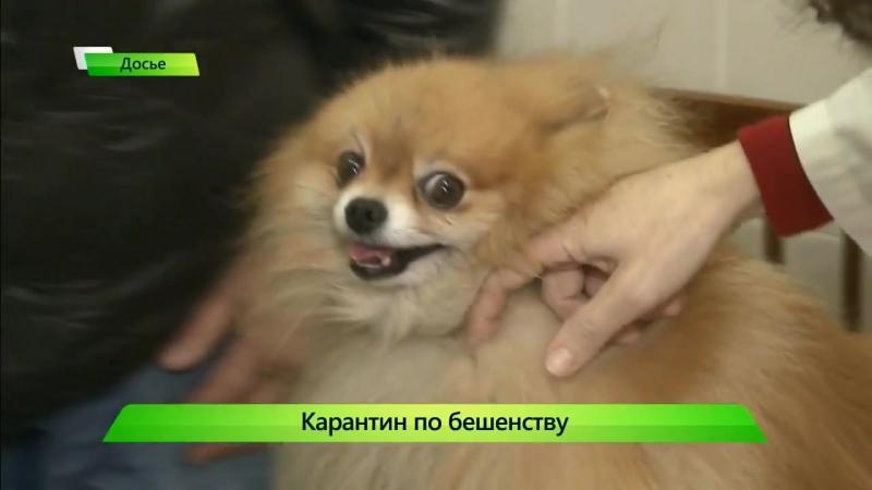 Первый городской канал в Кирове - ИКГ Бешенство 9 » Freewka.com - Смотреть онлайн в хорощем качестве