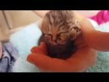 Котенок с двумя мордочками