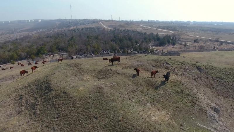 Камышбурунское кладбище и разграбленные курганы в районетелецентра