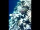 Неповторимый подводный мир Красного моря.Голубая лагуна,Дахаб.Шарм-эль-Шейх.Египет.