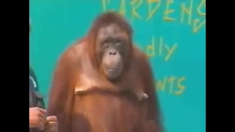 прикол с обезьяной.mp4