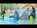 Sanaya irani playing with Dolphins in Dubai and Mohit sehgal Share Some pics of Skydiving | IPKKND
