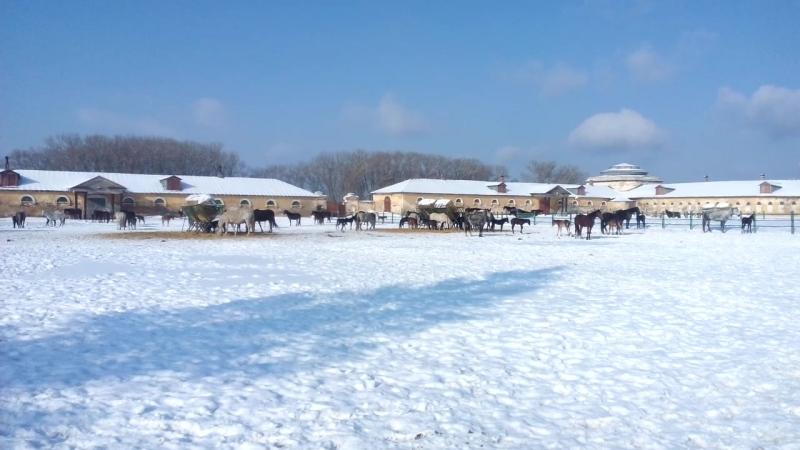 Хреновской конный завод