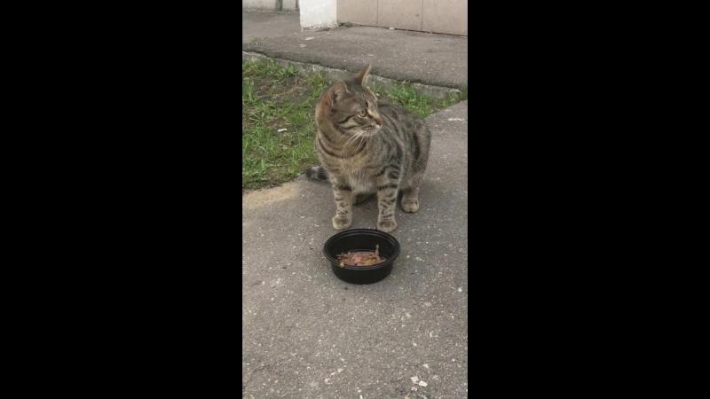 Накормить бездомного и пугливого кота - ✅ done
