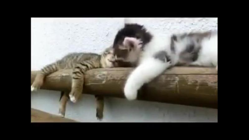 Коты бывают двух видов... 😸 Жми Нравится 👍,... - Шёпот - современный женский журнал(270p)