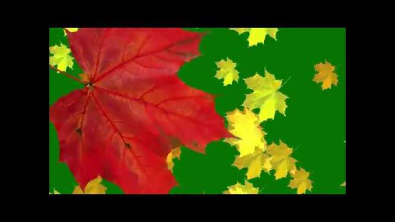 Green Screen Falling leaves, Transition Autumn Футаж Перход осенние листья клена