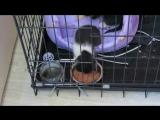 котята со стекловаты 2