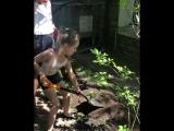 Дочь Кристины Орбакайте помогает в саду