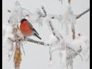 Сборник_Падает снег_Волшебные мелодии зимы_Music for the soul_