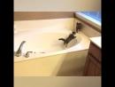 Нелегкое дело помыть котейку