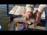 RC рыбалка