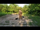 Алабай 4,5мес Альва дрессировка с 🐈 котами!