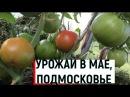 Выращивание ранних помидоров Урожай в мае часть2