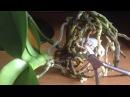 Орхидея. Борьба с вредителями. Желтый лист, обрезка цветоноса. часть 2