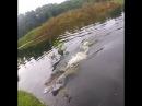 Наглый крокодил украл улов у рыбака