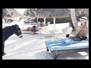 Hypnotizing Donkey into Meditation - Tulum beach - Mexico