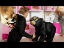 ЗВЕРИ СБЕЖАЛИ ИЗ ЗООПАРКА Схватка с медведем Мама Барби Маша и медведь