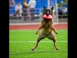 приколы с собаками - топ 10 приколов  с  собаками  смешные собаки зима 2015