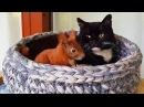 Удивительная история неразлучных белки и кошки