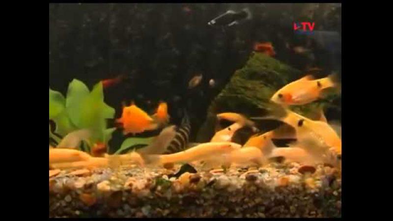 Бизнес идея Разведение аквариумных рыбок