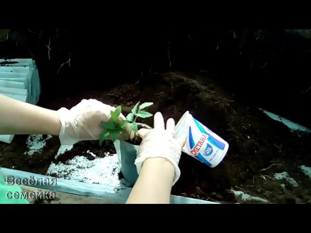 Стаканчики для рассады из пленки Как наполнять землёй