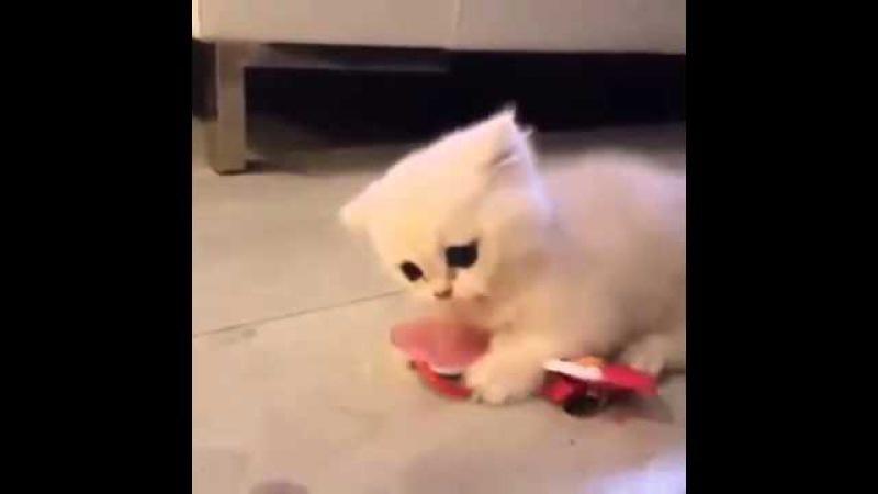 Gatito no quiere soltar su chupete