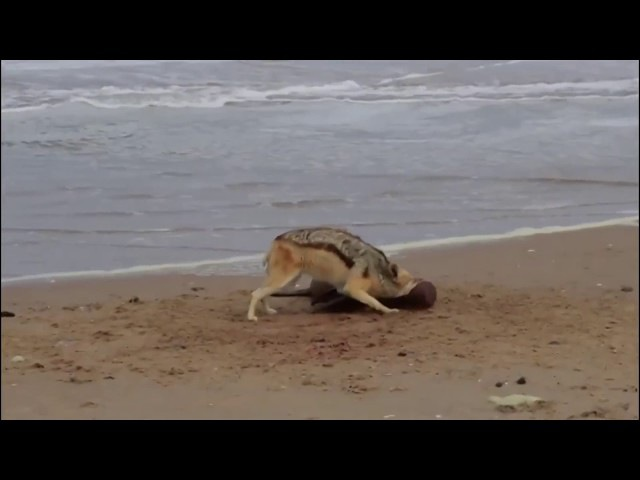 Amazing and unusual animals confrontation