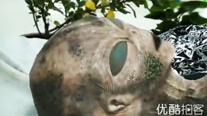 China Show The Alien Body In Roswell Incident At Hong Kong Museum