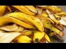 Du Wirst Nie Wieder Bananenschalen Wegwerfen Nachdem Du Dies Gesehen Hast