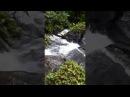 Aguas vivas en Costa Rica Sarapiqui Z