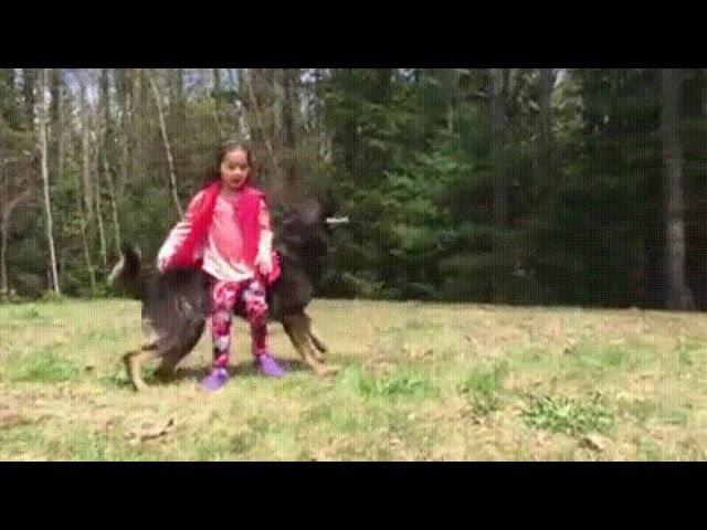 Собака защищает девочку